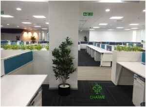 Artificial plants especially those with dense foliage like this ficus variety work well for open office layouts